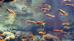Colorful aquarium, colorful fishes swimming Stock Footage