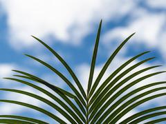 Palm leaves with blue sky Stock Photos
