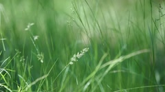 Long meadow grass swaying in breeze close up Stock Footage