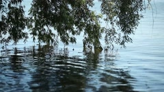 Willow branches water wave ripples Stock Footage