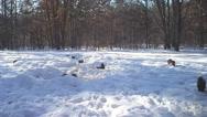 Stock Video Footage of Michigan Squirrel Winter