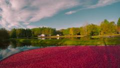 Aerial Footage of Cranberry Bog Stock Footage