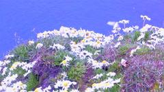 Arctic daisies on big bird house. Rookery on Novaya Zemlya archipelago Stock Footage