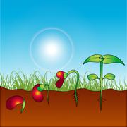 growing plant - stock illustration