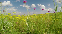 Dolly shot through the field of flowers Stock Footage