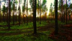 Flying trough forest at low altitude. Aerial footage Stock Footage