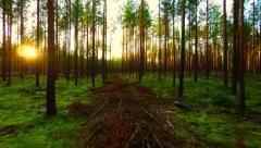 Green forest sunset. Low altitude flight. - stock footage