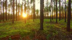 Flying trough forest at low altitude. Aerial footage. Right to left. Stock Footage