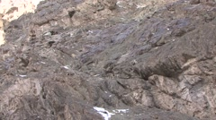 Blue Sheep herd walking in mountain in Ladakh in India 11 Stock Footage