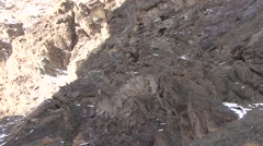 Blue Sheep herd walking in mountain in Ladakh in India 12 Stock Footage