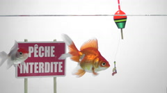 Goldfish swimming in front of a no fishing sign in French Stock Footage