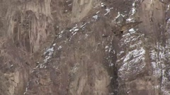 Lammergeier flying in Ladakh in India 4 Stock Footage
