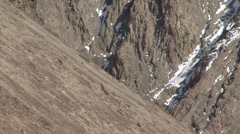 Lammergeier pair flying in Ladakh in India 1 Stock Footage