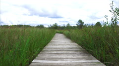Boardwalk through prairie with green grasses blowing in the wind Stock Footage