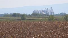 Grain silos in corn field Stock Footage