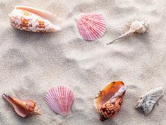 Sea shells,starfish and crab on beach sand for summer and beach concept. Stud - stock photo