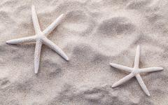 Stock Photo of Sea shells,starfish and crab on beach sand for summer and beach concept. Stud