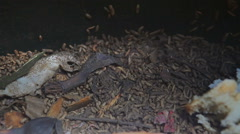 Putrefaction worms working in a compost container Stock Footage