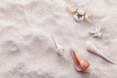 Sea shells,starfish and crab on beach sand for summer and beach concept. Stud Stock Photos
