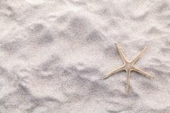 Sea shells on beach sand for summer and beach concept. Stud - stock photo