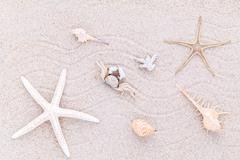 Sea shells,starfish and crab on beach sand for summer and beach concept. - stock photo