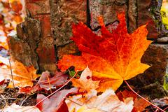 Background of red autumn leaves on forest floor Stock Photos