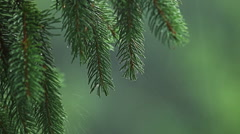 Heavy rain in mountain pine forest - stock footage