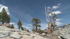 High Sierra Stock Footage