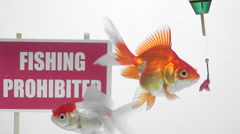 Goldfish swimming in front of a panel Fishing prohibited Stock Footage