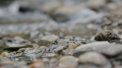 Close up Pebbles and Water - stock footage