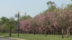 Cherry Blossoms in Washington DC with Monument Stock Footage