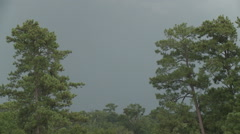 Lightning strikes between the Pines Stock Footage