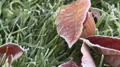 Early Frost On Fall Leaves Stock Footage