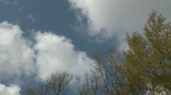 Clumps of Cumulus Above Trees in 4K Stock Footage