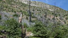 Burn Scar on California Mountain as Vegetation Returns Stock Footage