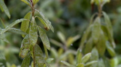 Ice Encrusted Garden Plants in Early Winter Storm Stock Footage