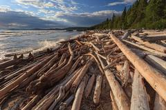 Driftwood at shore of Lake Superior Stock Photos