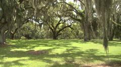 Spanish Moss Swings in Gentle Southern Alabama Breezes Stock Footage