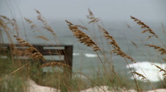Wind blows before strom.  - stock footage