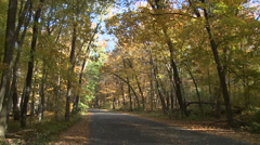 Slow Tilt Up into Forest Canopy of Early Fall Colors over Road Stock Footage