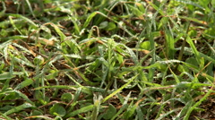 Dew on the Grass Stock Footage