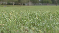 Close Up of Dew Drops Glistening on Blades of Grass in Park Stock Footage