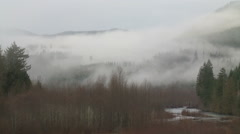Upslope Fog Hugs the Trees in the Cascade Mountains Stock Footage