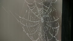 Close Up Dewdrops on spider Web on Summer Morning Stock Footage