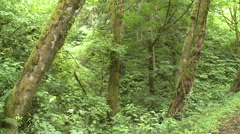 Pan Across Dense Oregon Coast Forest on Cloudy Day Stock Footage
