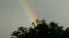 Zoom In on Rainbow Appearing Above Trees After Storm Stock Footage