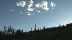 Saguaro Cacti Silhuetted on Hillside in Sonoran Desert Sunset - stock footage