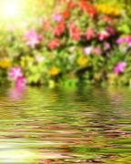 Surface Rippled of water and blur nature background Stock Photos