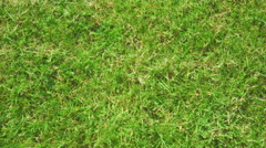 Green grass background 4K Stock Footage