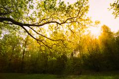 Sunlight Through Green Tree Crown - Low Angle View. Spring Sun S Stock Photos